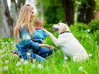 Bir köpek yaşı niçin yedi insan yaşına eşittir?