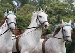 Atlar insanları ezdi