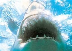 Mısırda köpekbalığı dehşeti!