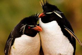 Penguenlere bilim zulmü!