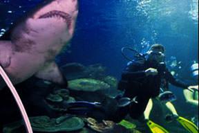 Köpekbalığıyla 45 dakika