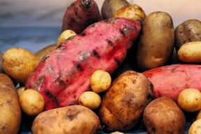Patates cinsel gücü arttırıyor