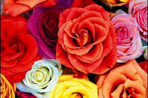 Şifalı ve güzel çiçek