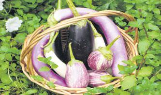 Patlıcan sükunet veriyor