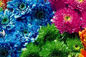 Çiçekleriniz canlı kalsın