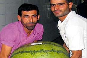 Diyarbakır'da 50 kiloluk karpuz