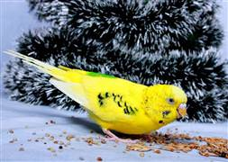 Bu kuş Erdoğan hayranı çıktı