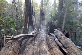 Uyuşturucu ağacı da yaktı