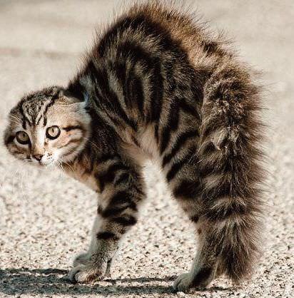 Bu kedi katili köpek değil mi?