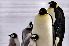 Kafayı bulup penguen çaldılar