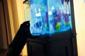 Bu balıklar kesin mundar