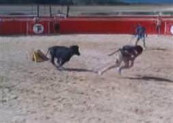 Mehmet Topal matador olursa