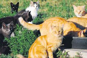 Kediler yuva yıktı