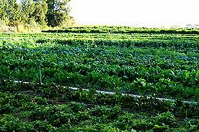 Organik tarım atağa kalktı