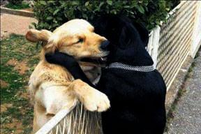 Aşk acısı çekeni avutmak!