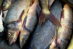 Bu da Sazan balığı tatlısı