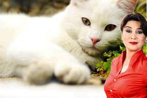 Kediye nafaka