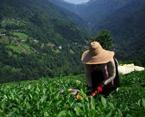 İşçilerden çay molası