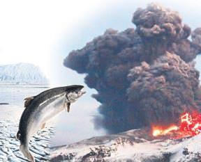İzlanda'nın zehirli balıklarını yedik