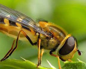 Arı saldırısı can aldı!