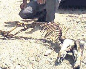 Esrarengiz hayvan iskeleti