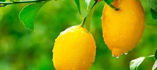 Böbrek taşına limon sıkın