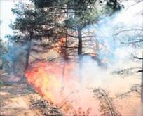 Piknik ateşi 4 hektarı katletti