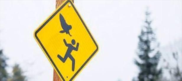Dikkat! Bay kuş çıkabilir