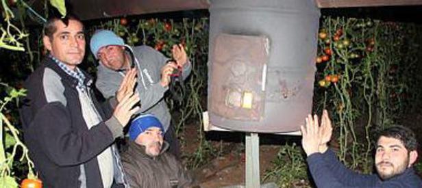 Ortaca'daki domates seralarını don vurdu