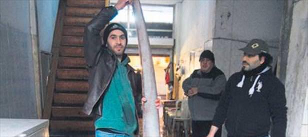 4 metrelik kuyruklu köpekbalığı