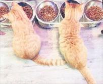 Tayland'ın kedi kafesi: Caturday