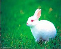 Tavşan tutkusu