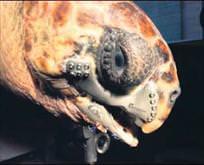 Caretta carettaya 3D çene protezi