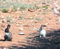 Tavşanlara can suyu