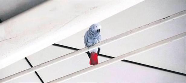 Kafesini görünce yakalandı