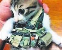 Kediler canlı bomba oldu