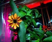 Uzaylı çiçek