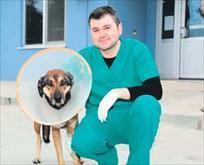 Sokak köpeğine dost eli