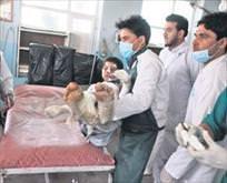 Afganistan yandı: 52 ölü, 73 yaralı