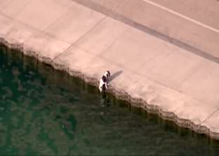 chicago-police-officer-rescues-dog-from-lake-michigan--raw-video